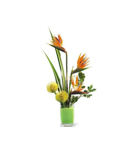 The Tropical Bright Arrangement